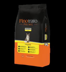 Finotrato Prime Kittens